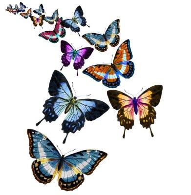 Sticker Butterfly