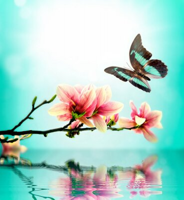 Sticker Butterfly and flower magnolia
