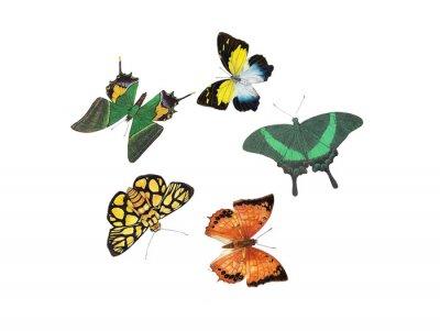 Sticker butterfly design