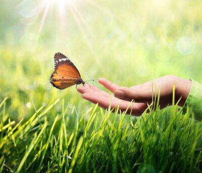 Sticker butterfly in hand on grass
