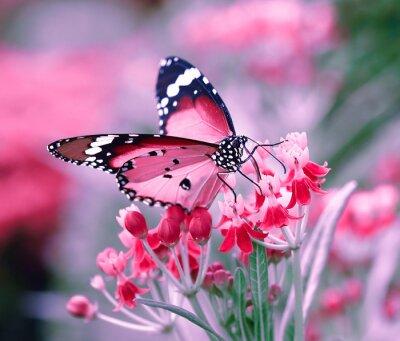 Sticker Butterfly on orange flower