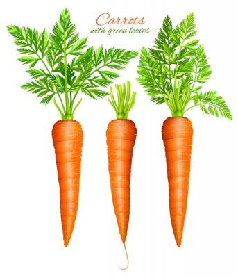 Sticker Carrots with leaves