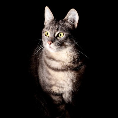 Sticker Cat, black background