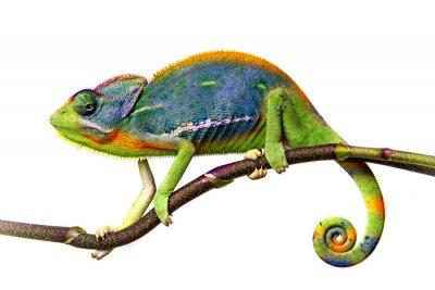 Sticker chameleon