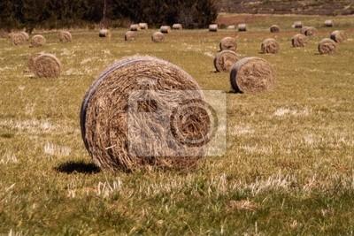 champs de rouleaux