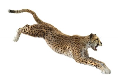 Sticker Cheetah