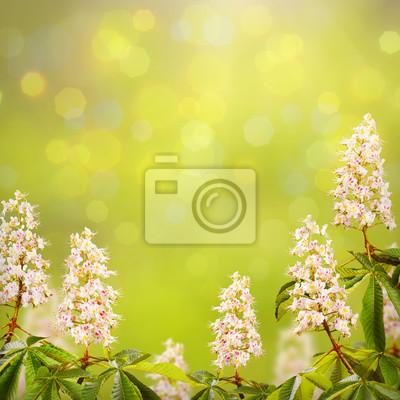 Chestnut flowers background