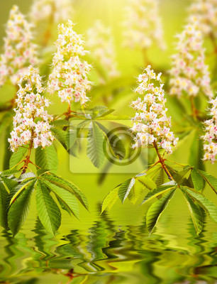 Chestnut flowers reflected in water