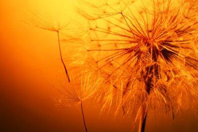 Sticker close up of beautiful dandelion
