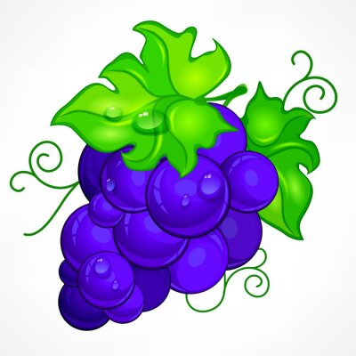 Sticker Cluster blue grapes with green leaf and drop water on white,