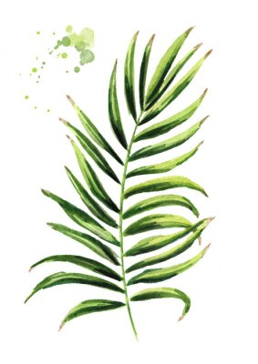 Sticker Coconut branch. Watercolor hand drawn illustration, isolated on white background