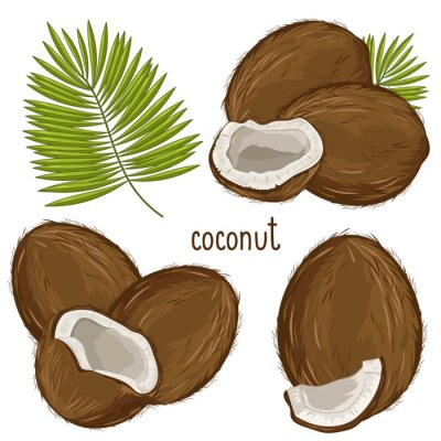 Sticker Coconut Isolated, Vector.
