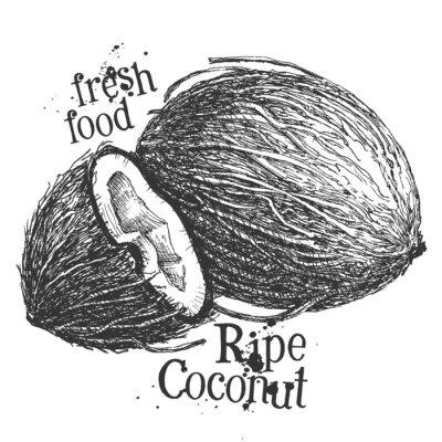 Sticker coconut on white background. sketch