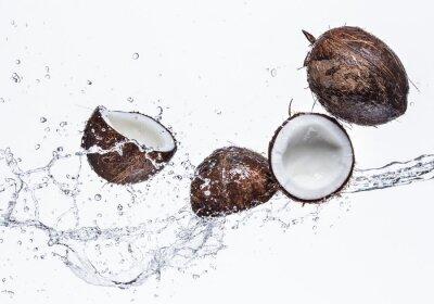 Sticker Coconuts with water splash
