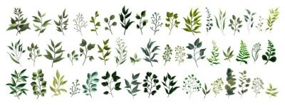 Sticker Collection of greenery leaf plant forest herbs tropical leaves