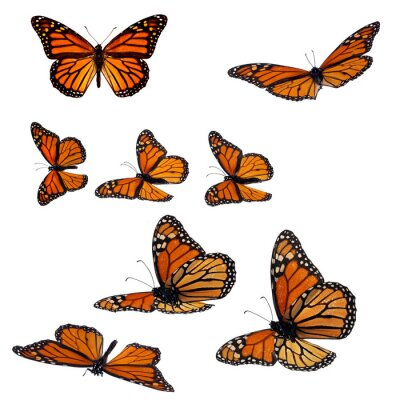 Sticker Collection of monarch butterflies