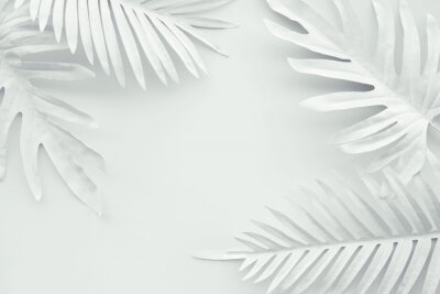 Sticker Collection of tropical leaves,foliage plant in white color with space background.Abstract leaf decoration design.Exotic nature art