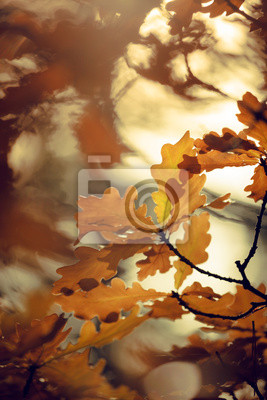 Sticker Colorful autumn leaves