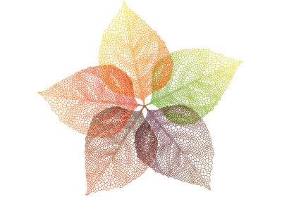 Sticker colorful autumn leaves, vector