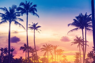 Sticker Copy space of tropical palm tree with sun light on sky background.