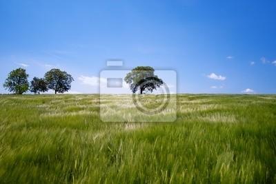 corn landscape bio