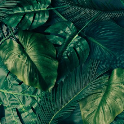Sticker Creative tropical green leaves layout. Nature spring concept. Flat lay.
