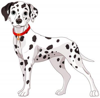 Sticker Cute Dalmatian Dog