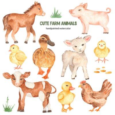 Sticker Cute farm animals horse, pig, lamb, calf, duck, duckling, watercolor chick