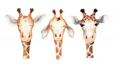 Sticker Cute giraffe cartoon watercolor illustration animal set