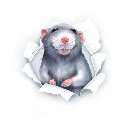 Sticker Cute gray cartoon rat, paper breakthrough, digital painting