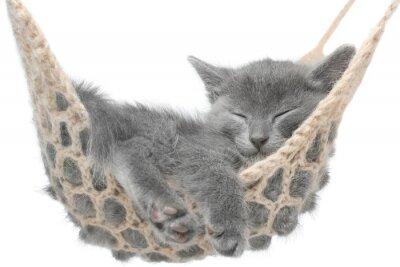 Sticker Cute gray kitten lying in hammock