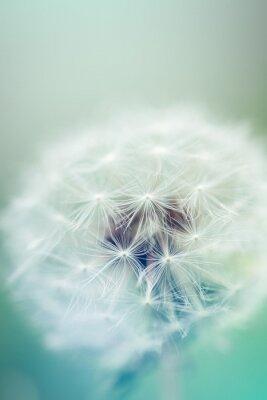 Sticker Dandelion seeds