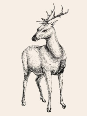 Sticker Deer vector illustration, hand drawn, sketch