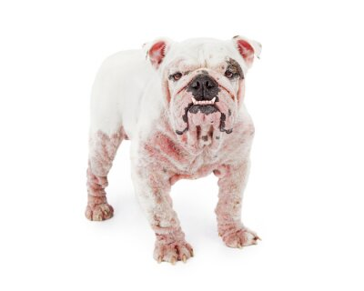 Sticker Dog With Demodectic Mange