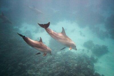 Sticker Dolphin under water