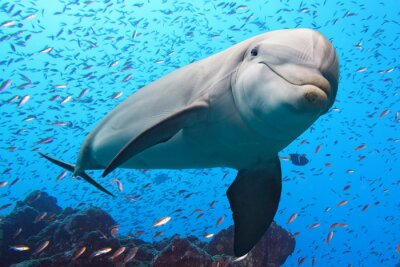 Sticker dolphin underwater on reef background