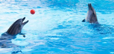 Sticker Dolphins play balls