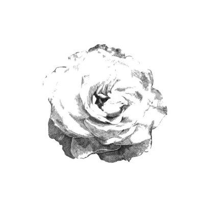 Sticker drawn rose