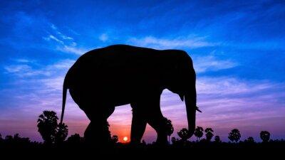 Sticker Elephant andpPalm tree on twilight time