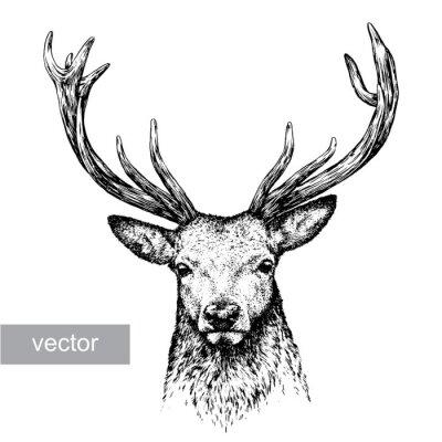Sticker engrave deer illustration