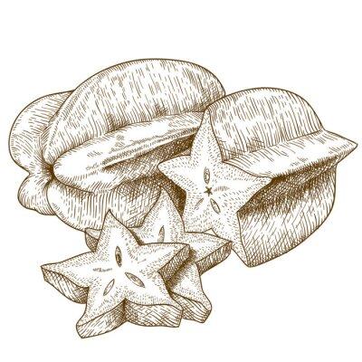 Sticker engraving  antique illustration of carambola