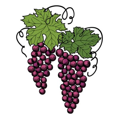 Sticker engraving grapes on the branch on white background