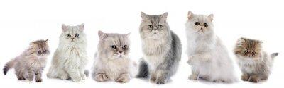 Sticker family persian cats