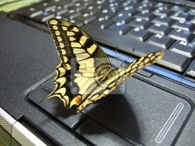 Farfalla su PC