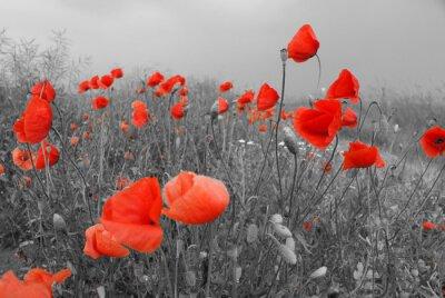 Sticker Feld mit roten Mohnblumen im Sommer