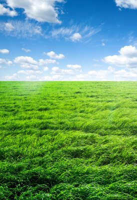 Sticker field of grass and perfect sky