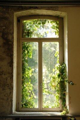 Sticker finestra