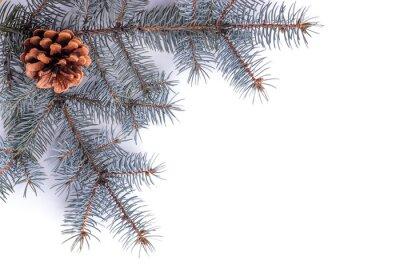 Fir tree_1