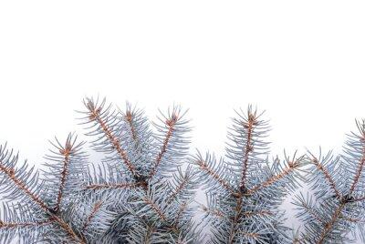 Fir tree_4