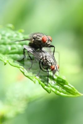 Sticker Flies